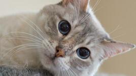 Котките и тяхното антистресово действие