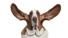 Чисти ушички? Да, благодаря!