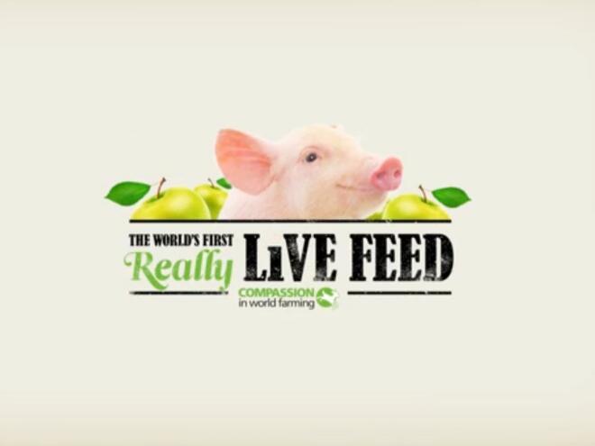 Помогни на фермер, нахрани прасе