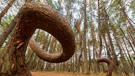 Да се изгубим в Танцуващата гора