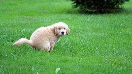 Има ли кучето компас под опашката си?