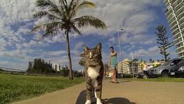 Спортно вдъхновение: котка на скейтборд