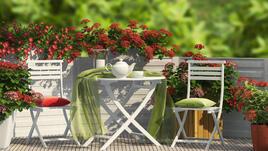 Превърни балкона си в зелена градина!