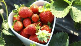 Ето така ягодите ще ви помогнат да отслабнете