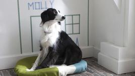 Направете къща на своето куче