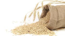 Небелен овес срещу цистит и камъни в бъбреците