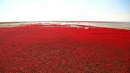 """Приказният """"Червен плаж"""" в Панджин, Китай"""