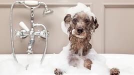 Животните, които обичат да се къпят (Видео)
