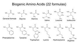 Защо аминокиселините са толкова важни за нас?