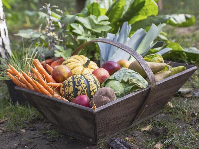 7 здравословни зимни зеленчука
