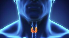 17 знака за проблеми с щитовидната жлеза
