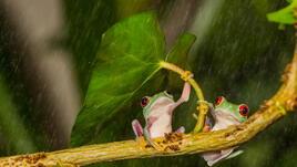 14 животни с фешън чадъри
