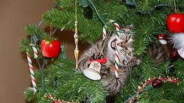 11 котки в помощ на коледната декорация