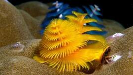Най-красивите коледни елхи в подводния свят