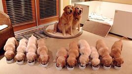 15 горди кучета-майки с техните потомства