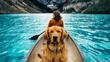 Кучето, което обича да пътува и да се снима