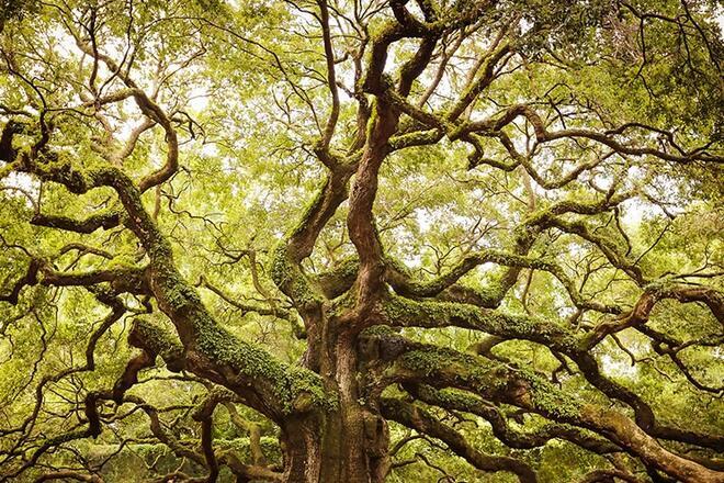 Високо в планината разказват за дърво, което лекува болки в ставите