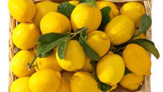 Лечебни способности на лимоните