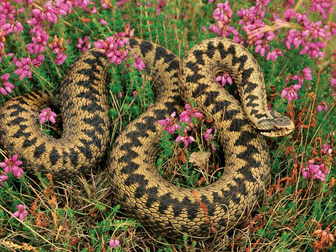 Преходът и змията. Как да ходим по-спокойно по туристическите маршрути?