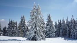 Забавления и спорт за децата през зимата