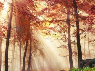 Как да преодолеем есенната умора с Аюрведа