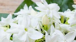 5 растения, които се грижат за добрия сън