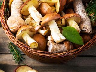 Гъбите са от полза в борбата срещу килограмите