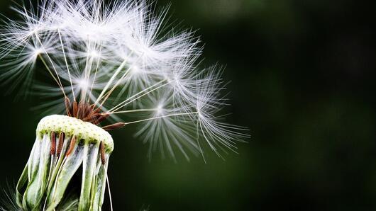Д-р Златка Михайлова: Алергиите засягат 20% от населението