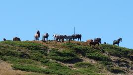 Към Козя стена, с конете