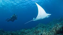 Чудесата под водата