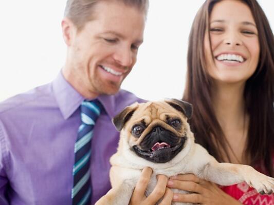За домащните любимци и здравето: Кучето - Здраве - fitwell.bg