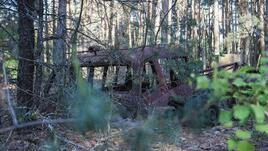 Природата винаги се завръща... дори в Припят