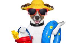 Лятна мода за кучета